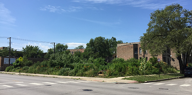 MLK District Garden site, 2019